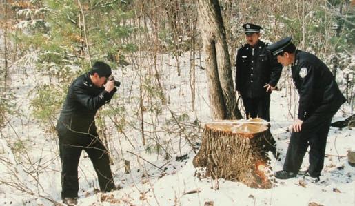 从盗伐林木罪与盗窃罪的关系的角度来探讨两者的区分